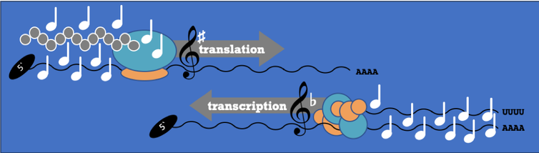 Comparison of DNA a music