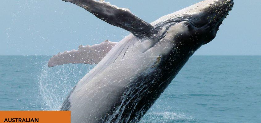 Features of Antarctic Animals
