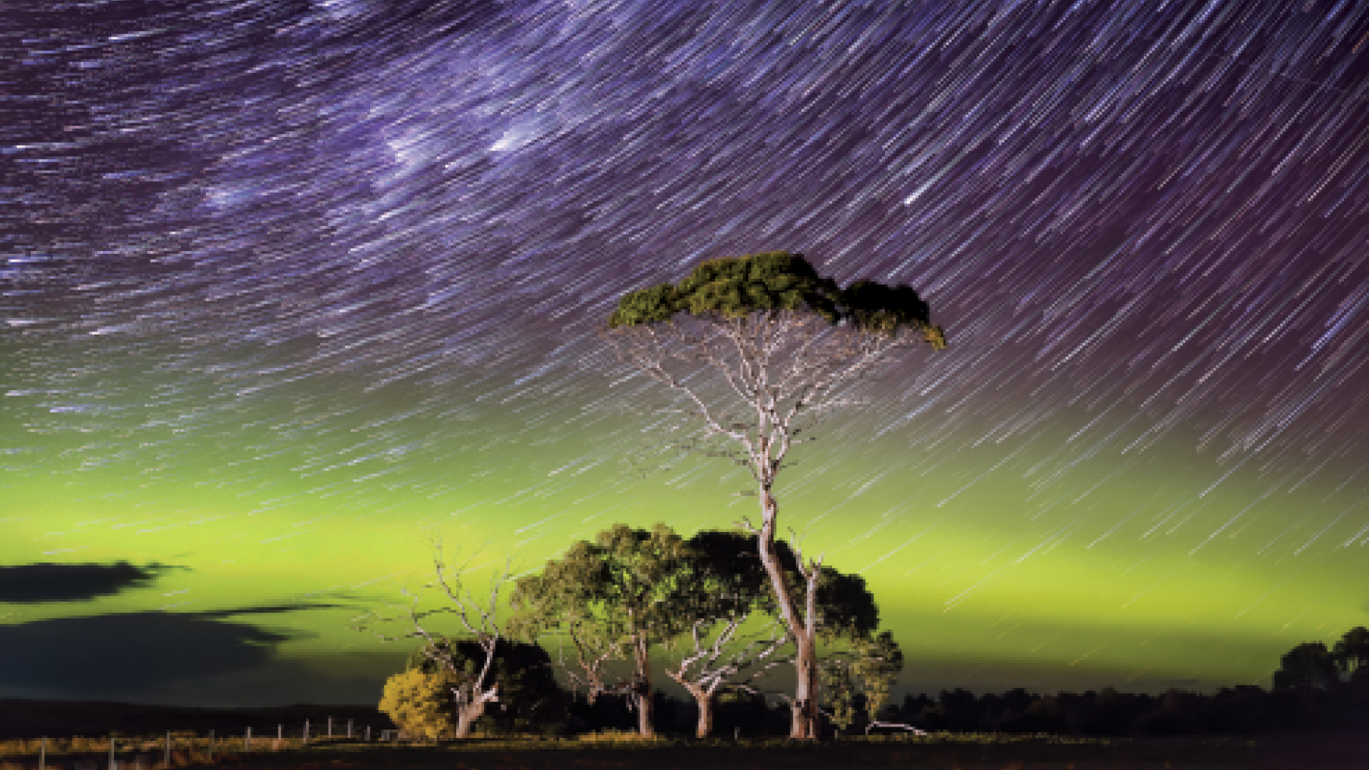 Star Trails over a bright green arc of aurora with an illuminated tree in the foreground Comet style star trail image with a bright green band of the Aurora Australis or Southern Lights arcing across the image with some illuminated trees in the foreground.