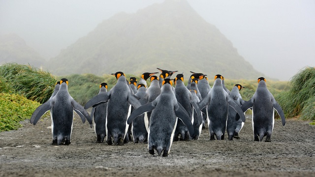 Antarctic biodiversity is under threat from climate change