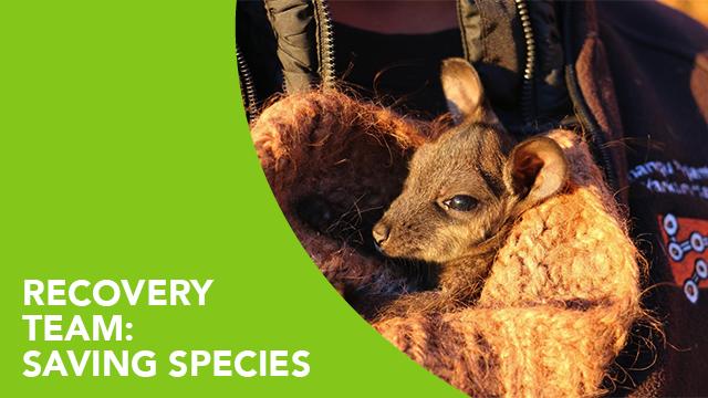 Recovery Team: Saving Species